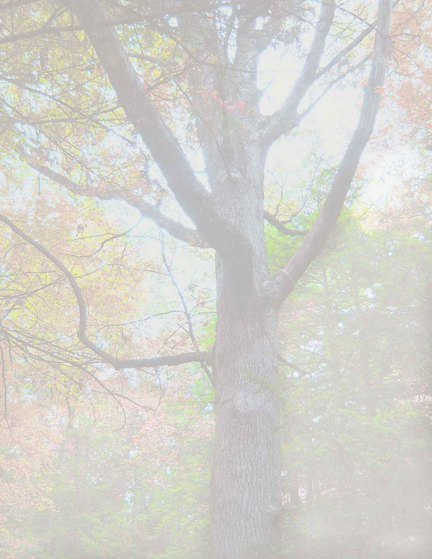 TreePlay-poster-2011-2.jpg