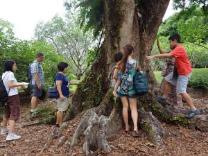 Tree Love, Singapore