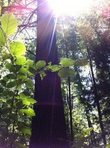 Transcendence Tree