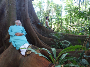 Tree Love: Heart of the Forest, Byron Bay Morton Bay Fig