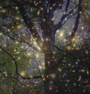 Oak Tree and Hubble stars; photo art by Elisa.