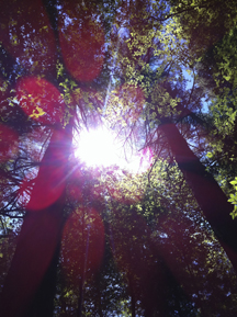 Sunburst through Pines (photo: Elisa Novick)