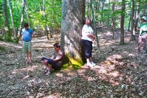 Tree Love, Rhinebeck, NY, U.S.A.