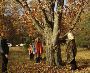 Tree Love, communing with The Maple